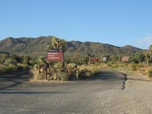 Joshua Tree Black Rock Campground