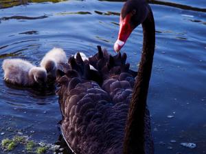 Lake Victoria Bird Watching Tour Photos