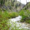 Black Warrior Trail