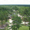 Bladen Lakes State Forest