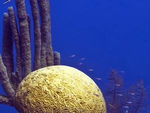 Barrera de Arrecifes de Reserva