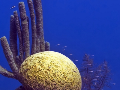 Blue  Hole Coral