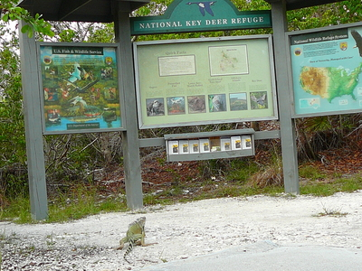 Blue  Hole  Big  Pine  Key Sign