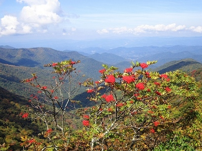 Blue Ridge From Craggy Gardens - Asheville NC