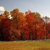 Blue Ridge Parkway NC Autumn Grove