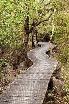 Boardwalk To Hawkes Lookout @ Kahurangi National Park NZ