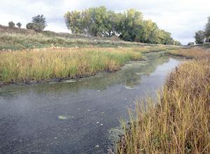 Bois de Sioux River
