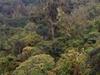 Ambor National  Park