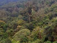 Amboro Parque Nacional