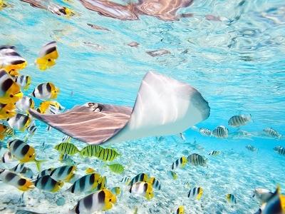 Bora Bora Marine Treasure