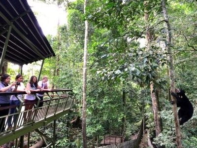 Bornean Sun Bear Conservation Centre - View