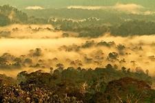 Borneo - Danum Valley National Park - Sabah