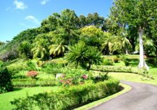 Botanic Gardens Kingstown.