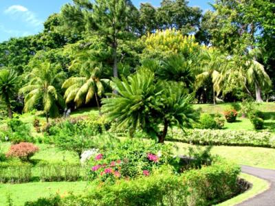 Botanic Gardens Kingstown.
