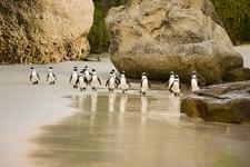 Boulders Beach SA Table Mountain National Park