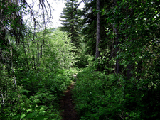 Bowman Lake Head Trail - Glacier - Montana - United States
