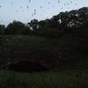 Bracken Bat Cave In The Night
