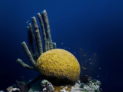 Brain & Tube Corals Of The Great Blue Hole