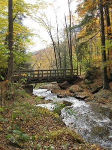 Bridge Inside Ricketts Glen State Park PA