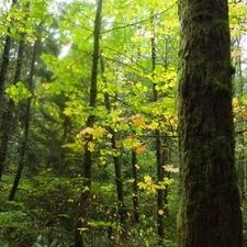 Bridle Trails State Park