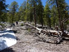 Bristlecone Trail Hike - Nevada