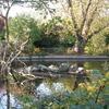 Brookmill Park Lake