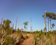 Brush Trail 249 - Tonto National Forest - Arizona - USA