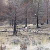 Buffalo Fork Trail - Yellowstone - USA