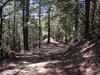 Bull Creek California