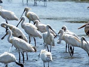 Bird Watching in Srilanka Photos