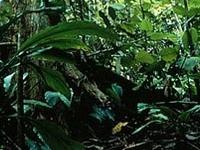 Bung Hatta Reserva Forestal