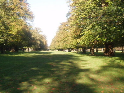 Bushy Park Autumn