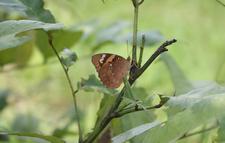 Butterflies Muba Jungle Resort Kanha National Park