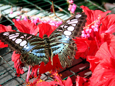 Butterfly Park Inmate