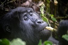 @ Bwindi Forest UG