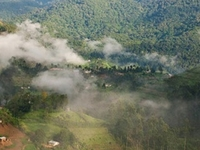 Penetrate The Impenetrable Bwindi Forest