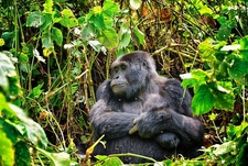 @ Bwindi Impenetrable Forest UG