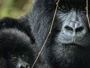 3 Days Gorilla Special