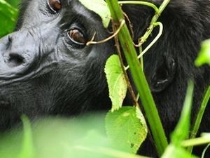 Best of Uganda Safari Tour