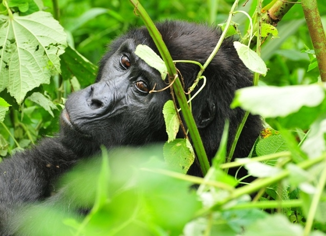 Best of Uganda Safari Tour Photos