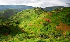 Bwindi @ Southwestern Uganda