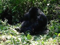 Bwindi Trekking Grillas