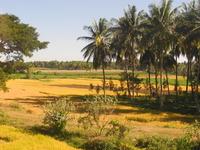 Byadarahalli