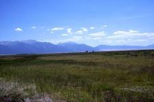Wet Hay Meadow