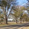 The Avenue Of Honour In Bacchus Marsh