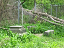 Bachelors Grove Fallen Tree