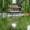 Purple Bamboo Park