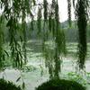 Lake In Park