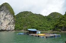 Barge At Cat Ba National Park