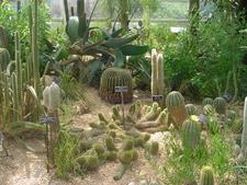 Steinhardt Conservatory Desert Collection